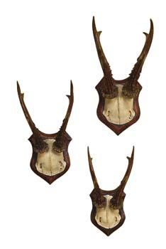 1-elk-antlers-set