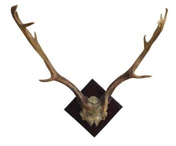2-resin-antlers